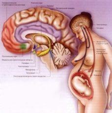 Hipofiz bezi tümörü belirtileri